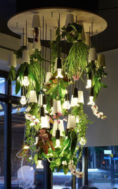 Plant Chandelier - created using Sky Planters that enable you to grow indoor plants upside down | #greenouse