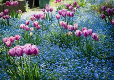 15parts ofthe world inwhich spring isespecially beautiful