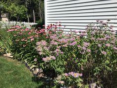 Native Plants, Perennials, Beds, Outdoor Structures, Landscape, Garden, Scenery, Garten, Lawn And Garden