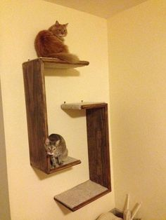 I'm on the hunt for cat tree ideas to expand my small New York Apartment. My kitties need some territory! Cat Tree Hanging Shelf Unit Set of 2 by WODdawgApparel on Etsy, Cat Wall Shelves, Cat Climbing Shelves, Climbing Wall, Hanging Shelves, Diy Cat Tree, Cat Perch, Pet Furniture, Unique Furniture, Apartment Furniture