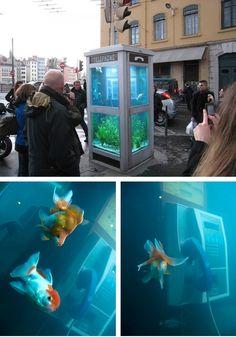 Public Fish Tank