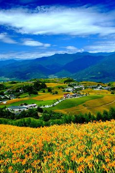 Flower Harmony, Hualien, Taiwan. Via Sho's flickr. >>https://www.flickr.com/photos/masamune/.