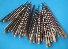 Sea Urchin Spines for Crafts - Bing Images