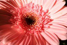 flower Fall Bouquets, Dandelion, Autumn, Flowers, Plants, Fall Season, Dandelions, Fall, Plant