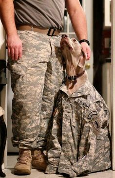 Inseparable   #military #dogs