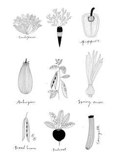 Badass Creativity // Illustration for River cottage cookery school by Ryn Frank Illustration Botanique, Botanical Illustration, Graphic Illustration, Editorial Illustration, Motif Floral, Food Drawing, Food Illustrations, Botanical Prints, Beautiful Artwork