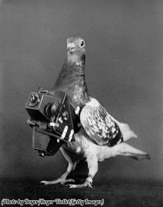 A pigeon fitted with a camera for doing aerial surveys, France, circa 1910. His name was Google. jk.