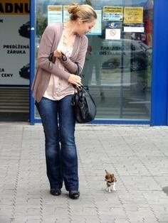 Alles Gute Klein Fanfarella Zum 1 Bday Fanfarella Chihuahua Puppies Baby Chihuahua Teacup Chihuahua Puppies