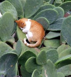 The cat lies above the cactus cat kitty cute cactus Animals And Pets, Baby Animals, Funny Animals, Cute Animals, Animal Babies, I Love Cats, Crazy Cats, Cool Cats, Beautiful Cats