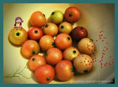 Aratilis / Jamaican Cherries freshly picked from a tree