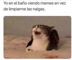 Funny V, Funny Cats, Funny Memes, Meme Meme, Funny Spanish Memes, Spanish Humor, Bff Images, Youtube Memes, Bizarre