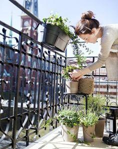 Kräuter Garten Balkon pflanzen Ideen                                                                                                                                                      Mehr