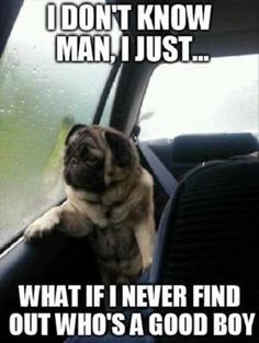 Funny pictures about Introspective pug questions his life. Oh, and cool pics about Introspective pug questions his life. Also, Introspective pug questions his life. Pug Meme, Funny Dog Memes, Funny Dogs, Funny Animals, Dog Humor, Pug Jokes, Farts Funny, Talking Animals, Funniest Memes