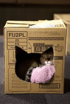 DIY cat box {tip: cover the closed box with adhesive backed contact paper...comes in all kinds of colors, including wood finishes}
