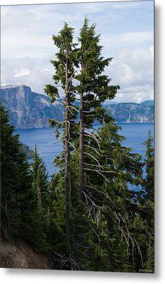 Trees On Crater Lake Oregon State Usa Metal Print By Alexander Fedin