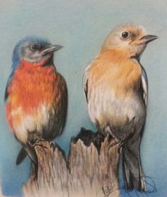 Butterflies and Birds in Colored Pencil and Pastel - Artist's Network #drawing #art