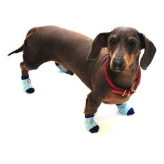 Pet Ego Home Comfort Traction Control Socks