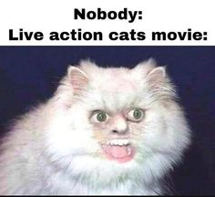 """Here's collection of some """"Top New Cat Memes"""" that will make you happy and funny for whole day and maybe for whole week. Just read out these """"Top New Cat Memes"""" and keep enjoy and also share with your friends. Top New Cat Memes Top New Cat Memes Top… Stupid Funny, Haha Funny, Funny Cute, Funny Sexy, Funny Relatable Memes, Funny Posts, Hilarious Memes, Funny Gifs, Funny Humor"""