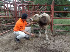 Hurricane Patricia: Delivering aid to the animals of Mexico