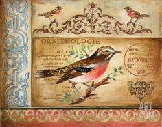 Ornithology Print by Gregory Gorham at eu.art.com