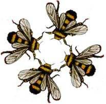 Symbolic Bees