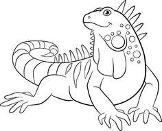 on iguana Colouring Pages | Clean Lines | Coloring pages, Coloring ...