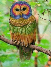 absolutely smart owl items. Women can be beautiful  kind nurturing and very smart AND wise Empower Very Rare Red Owl Blue eyes Animal categories
