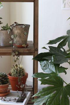 displaying plants indoors