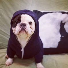 Manny (Instagram: @manny_the_frenchie) is nominated for a World Dog Award! See if he wins on Thursday, January 14, 2016 on The CW.