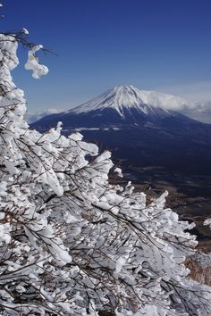 Soft rime with Mount Fuji, Japan