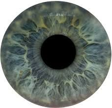 Image result for eye iris vector