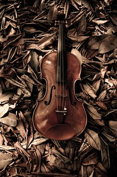 Rich warm brown shades of the violin against the rusty brown leaves! Natur Wallpaper, Coffee And Cigarettes, Brown Aesthetic, Violin Music, Brown Eyed Girls, Brown Beige, Brown Shades, Earth Tones, Belle Photo