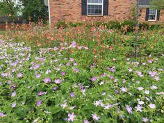 Flowers Perennials, Native Plants, Flower Beds, Sustainability, Landscape, Garden, Nature, Scenery, Garten