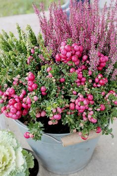 Container gardening is a fun way to add to the visual attraction of your home. You can use the terrific suggestions given here to start improving your garden or begin a new one today. Your garden is certain to bring you great satisfac Container Plants, Container Gardening, Beautiful Gardens, Beautiful Flowers, Fall Planters, Deco Floral, Winter Flowers, Autumn Garden, Autumn Summer
