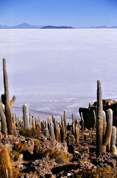 The Salar de Uyuni (Bolovia) is the largest salt flat in the world. This surreal and unusual natural phenomenon is the result of a giant prehistoric lake (Lake Minchin) that dried about 40.000 years ago. La Isla del Pescado full of giant cactuses it is the only sign of life in miles, apart from thousands of flamingos that spend here several months to breed.