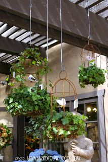 Ivy Cages