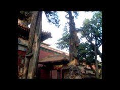 GUÉRISON DE L'AME: MUSIQUE de BOLS TIBÉTAINS-HEALING MUSIC Tibetan bowl - YouTube
