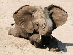 #elephant #animals