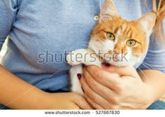Woman hands hold red and white kitty cat. Close up. Coloring and processing photos