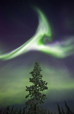 Treetop Aurora, Sweden by antonyspencer, via Flickr