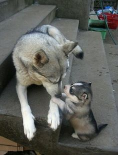 :) i want wolf puppies out of my wolf.