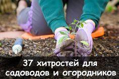 источникСАДОВАЯ ФЕЯ - Дача. Сад и Огород         37 хитростей для садоводов и огородников.1. Свекла любит полив методом дождевания и частые, но осторожные рыхления.2. После второго прореживания с…