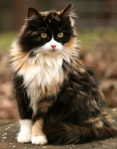 22 Cats With The Most Beautiful And Unique Coat Patterns In The World