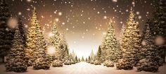 El planeta de los árboles de Navidad. Libro para niños.