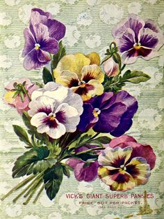 Ramo de pensamientos bouquet of pansies vick s garden floral guide 1903 fashion only for you 278910 newchic mobile Gardening Magazines, Gardening Books, Flower Gardening, Perfect Plants, Cool Plants, Art Floral, Vintage Seed Packets, Seed Catalogs, Chinese Garden