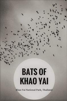 PIN - Bats of Khao Yai, Thailand