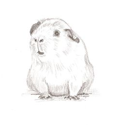 Hey, I found this really awesome Etsy listing at https://www.etsy.com/uk/listing/267202066/guinea-pig-friend-pencil-drawingpet