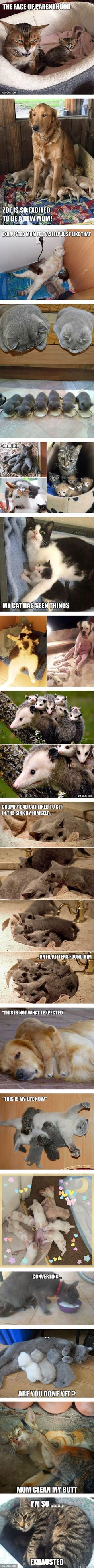 Animal Expressions That Perfectly Sum Up What It's Like To Be A Parent http://ibeebz.com