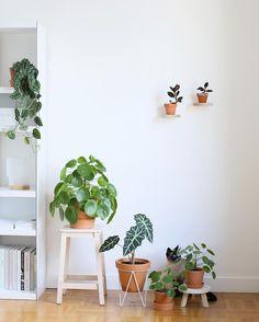 idée décoration urban jungle pour ranger ses plantes d'intérieur au sol