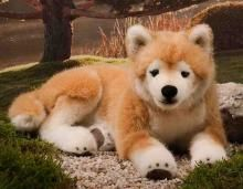 This Beautiful Japanese Shiba Inu is so soft and flexible it gives him a more realistic look and feel.  Made from a luxury Amber & white short pile plush he has hand applied airbrushing to his face and legs.  Produced by Kosen he evokes Quality and craftsmanship.